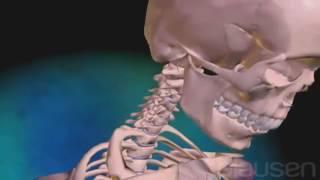 Массаж и Мануальная терапия. Хлыстовая травма шейного отдела позвоночника лечение