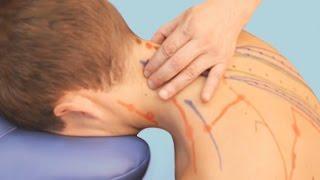 Точечный массаж шейно-воротниковой зоны. Точки акупрессуры при болях головы, в шее и надплечьях
